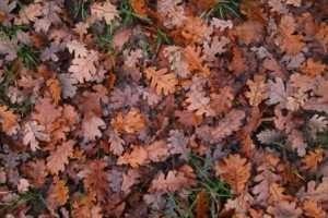 foglieinverno14